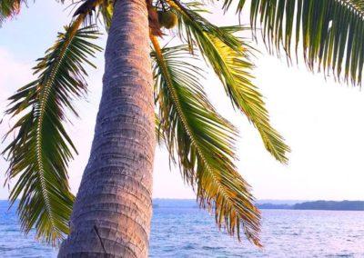 dany-island-view2